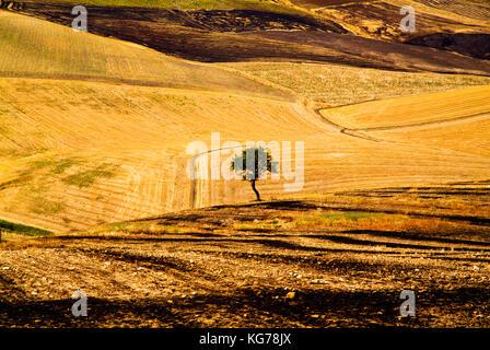 Burned wheat field, Apulia, Italy - Stock Image