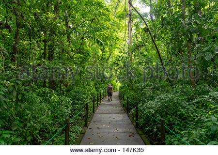 Walking along the trails in the jungle of carara national park in Puntarenas province, Costa Rica - Stock Image