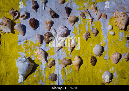 Colorful seashells as background, sea shells collection - Stock Image