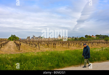 traditional elderly French man hiking near vineyard in front of the walled village of Carcassonne France - Stock Image