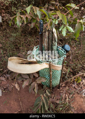 Mato Grosso State, Brazil. A traditional Kayapo design basket, but made of plastic binding tape, stands on the floor of the rainforest with Cumaru (Dipterix odorata, Tonka beans) and cut lengths of medicinal vine from the forest. - Stock Image