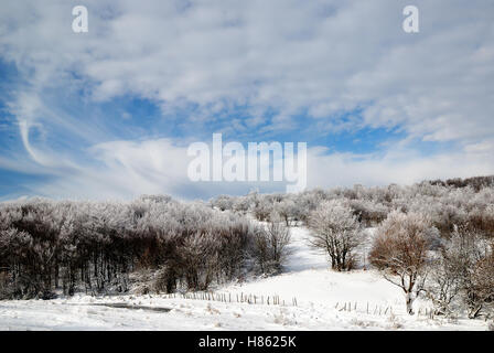 snowy park in winter with cloudy sky - Stock Image