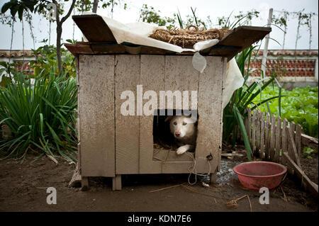 Ce chien dans sa niche fait parti d'une maison modèle que les touristes visitent le 12 octobre 2012. This dog - Stock Image