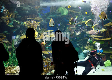 Family watching scuba diver clean glass of Rainbow Reef Indo-Pacific Coral reef aquarium at Ripley's Toronto - Stock Image