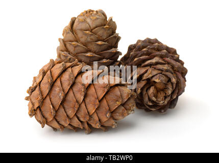 Group of ripe pine cones full of nuts isolated on white - Stock Image