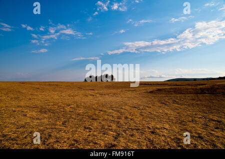 Meadow with yellow dry grass and blue sky. - Stock Image