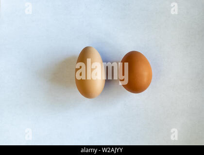 A very long, narrow egg besides a normal egg, both brown. laying on a white piece of paper, comparisson of egg shapes - Stock Image
