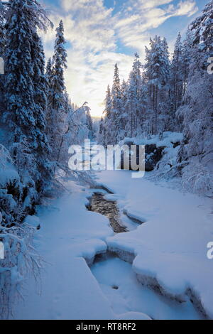 A natural river is flowing through a snow covered forest on a cold winter day in northern Sweden. - Stock Image
