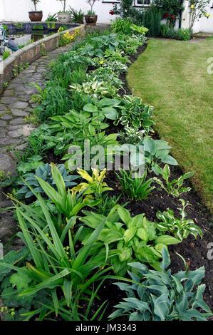 Hosta border in Cottage Garden - Stock Image