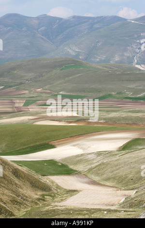 The Piano Grande in the Sibillini National Park,Umbria/Le Marche,Italy is famous for its Lentils and annual wildflower - Stock Image
