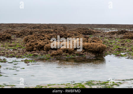 France, 2018, Shoreline, full of algue, and rock structures, - Stock Image