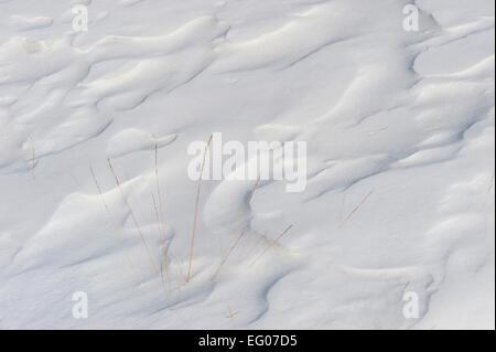 Snow, white, Cold, winter shrub, snow pattern - Stock Image
