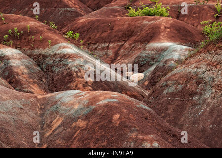 Rock formation of Cheltenham Badlands is located in Caledon, Ontario. The exposed and eroded Queenston Shale is - Stock Image