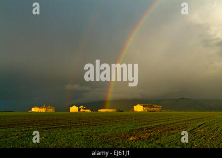 Rainbow on the wheat fields - Stock Image