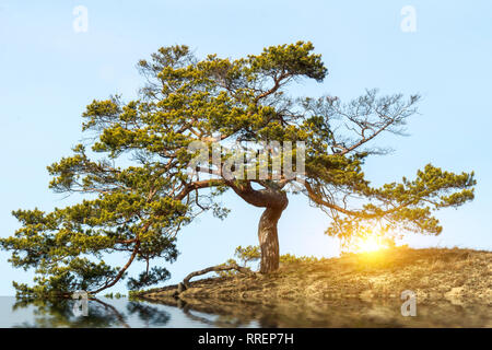 Tree with gnarled branches by river bank under cloudy blue sky - Stock Image