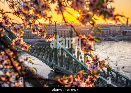 Budapest, Hungary - Spring in Budapest with beautiful Liberty Bridge over River Danube with traditional yellow tram, golden sunrise and cherry blossom - Stock Image