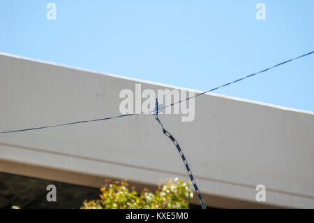 Dipole antenna set up for ham radio field day operations. - Stock Image