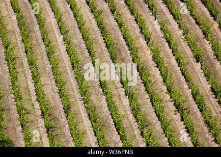 Chinon, France. Picturesque aerial view of a Chinon vinyard, in the vicininty of Rue des Quinquenays. - Stock Image