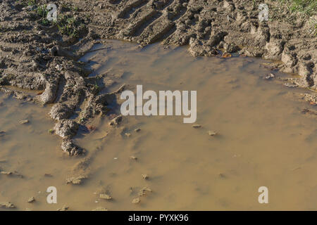 Heavy tractor tyre tracks in muddy water puddle hollow in agricultural field. - Stock Image