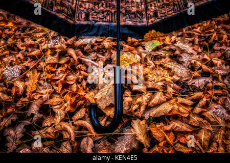 Inverted open umbrella lying on yellow maple leaves - Stock Image
