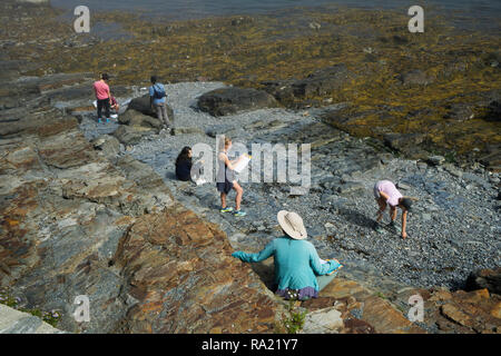 Students collecting minerals at low tide during a field trip in Bar Harbor, Maine, USA. - Stock Image
