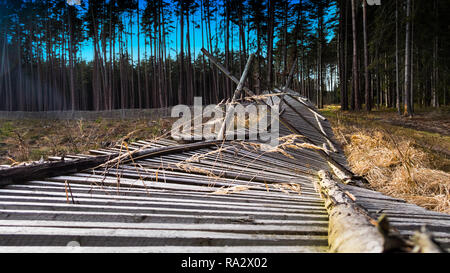 Close-up of a fallen fence of reforested area. Rural forest. Damaged protective wooden barrier of plant nursery. Dry grass spikelets. Coniferous trees. - Stock Image