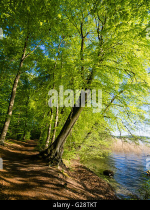 Cycle and walking path at Lake Schwerin, near Zippendorf, fresh green leaves, spring, Schwerin, Germany. - Stock Image