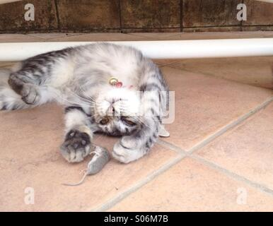Cat with mouse - Stock Image