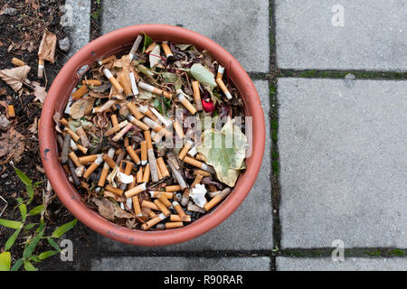 Discarded cigarette butts in a flower pot - Stock Image
