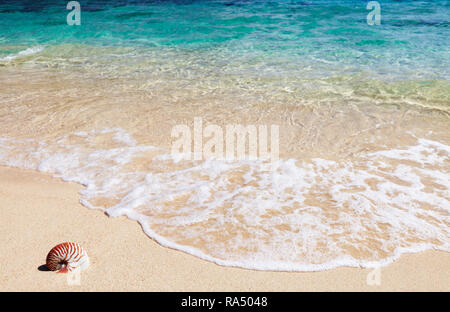 Tropical beach, sand and sea shell - Stock Image