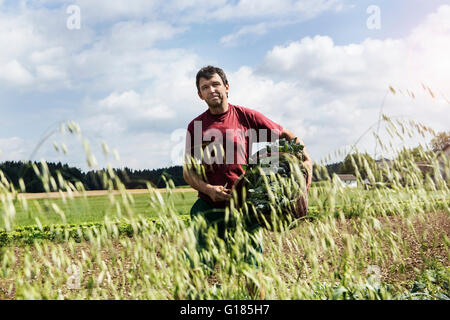 Farmer carrying basket full of vegetables in organic farm - Stock Image