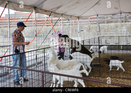 Petting zoo - Stock Image