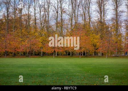 Autumn trees in Cambridge, UK - Stock Image