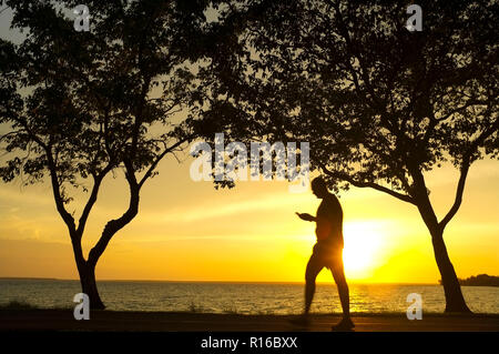 Silhouette of trees and a man walking while looking at his mobile phone, against a beach sunset . - Stock Image