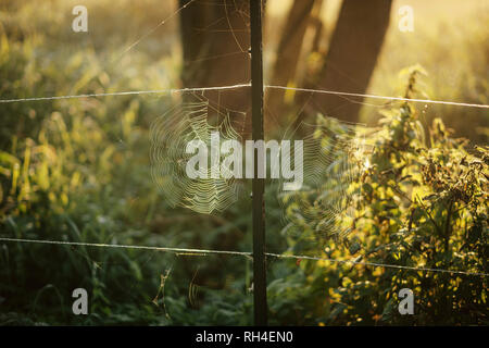 Intricate spiderwebs forming on rural fence - Stock Image