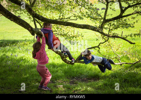 Kids playing on a tree at Castleward county Down - Stock Image