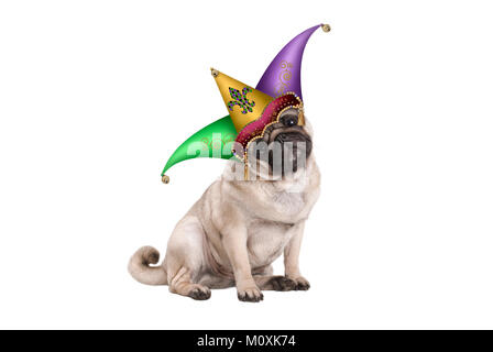 cute Mardi gras carnival pug puppy dog sitting down with harlequin jester hat, isolated on white background - Stock Image