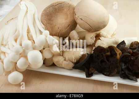 selection of Mushrooms - Stock Image