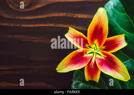 Bright Yellow Lilly with Orange Center on Wood Table with Space for Copy - Stock Image