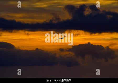 Sea bird flies out of dark cloud shadows and red skies of sunrise at Cosy Corner in Bay of Fires region near Saint Helens in Tasmania, Australia - Stock Image