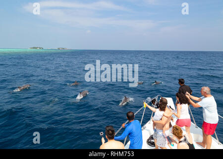 Dolphin watching in the Maldives - tourists watching dolphins jumping in the Indian Ocean, Rasdhoo Atoll, the Maldives Asia - Stock Image