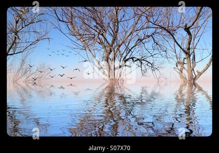 Flooded trees with birds in distance - Stock Image