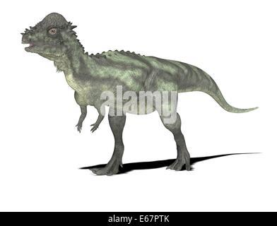 Dinosaurier Pachycephalosaurus / dinosaur Pachycephalosaurus - Stock Image