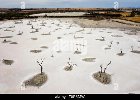 Salt lakes of Walk Walkin Nature Reserve, Western Australia - Stock Image