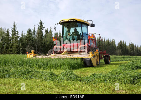 Farmer operating Mower Conditioner, harvesting pea & oat crop. - Stock Image