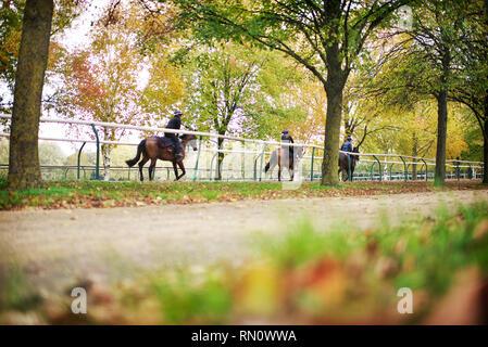 Training jockeys take horses on the gallops at Newmarket one Autumn morning - Stock Image