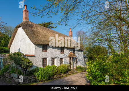 A picturesque thatched cottage on a quiet lane in Church Cove, on the Lizard Peninsula near Lizard village, Cornwall, England - Stock Image
