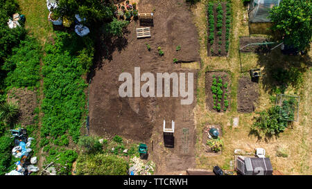 Cole Park Allotment, drone view, Isleworth, England, United Kingdom - Stock Image