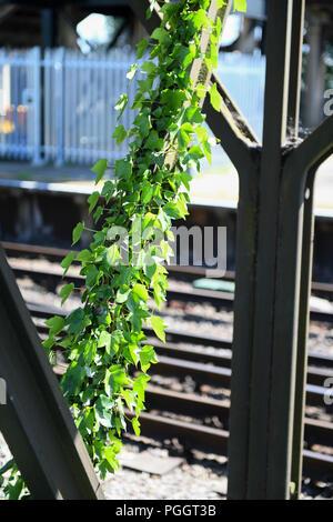 Ivy growing over metal  railway bridge in the inner city. - Stock Image