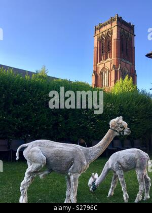 The alpacas of Winson Green, Birmingham. - Stock Image